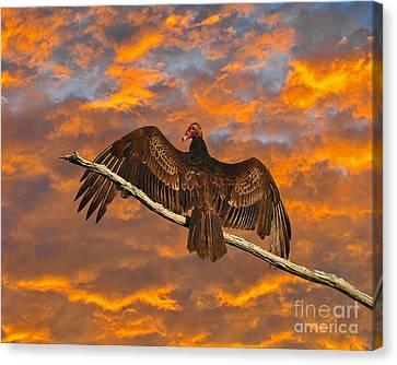 Vivid Vulture Canvas Print by Al Powell Photography USA