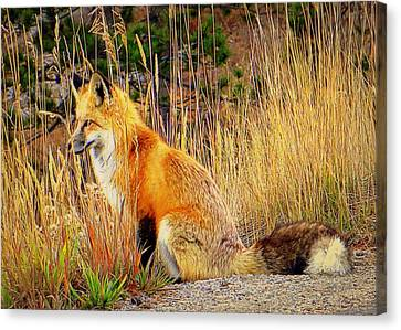 Canvas Print featuring the photograph Vixen by Karen Shackles