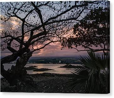 Volcanic Sunset On Hilo Bay - Big Island Canvas Print by Daniel Hagerman