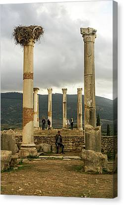 Moroccan Canvas Print - Volubilis Archeological Site by Photostock-israel