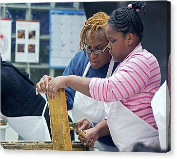 Beeswax Canvas Print - Volunteers Uncapping Honeycomb by Jim West