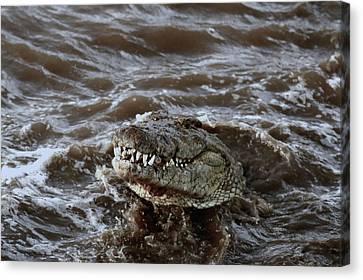 Voracious Crocodile In Water Canvas Print