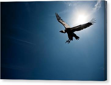 Vulture Flying In Front Of The Sun Canvas Print by Johan Swanepoel