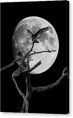 Vulture Moon Canvas Print by David Lester