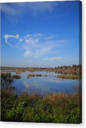 Wading Bird Way 001 Canvas Print