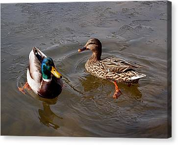 Natural Art Canvas Print - Wading Ducks by Rona Black