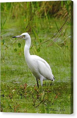 Wading Heron Canvas Print by Dan Williams