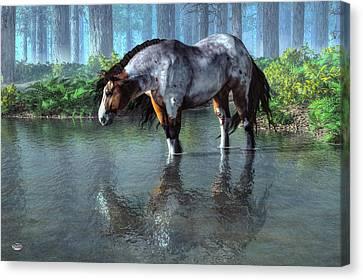 Wading Horse Canvas Print by Daniel Eskridge