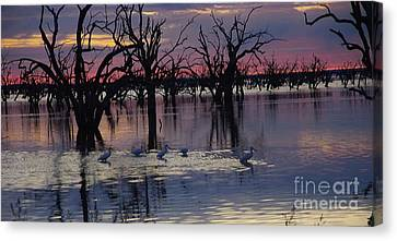 Wading The Shallows Canvas Print