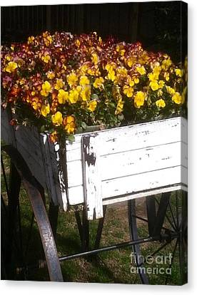Wagonful Of Happy Pansies Canvas Print by Barbara Chase