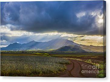 Waianae Mountains Of Oahu Hawaii Canvas Print by Diane Diederich