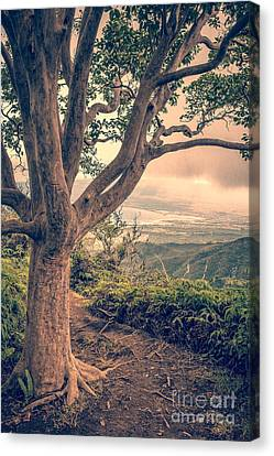 Parc Canvas Print - Waihee Ridge Trail Maui Hawaii by Edward Fielding
