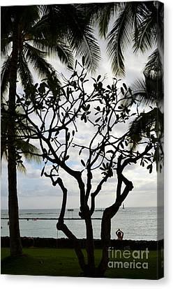 Waikiki Beach Hawaii Canvas Print