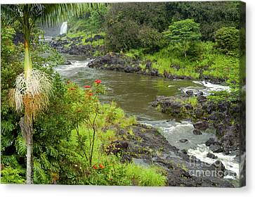 Wailuka River Canvas Print by Bob Phillips