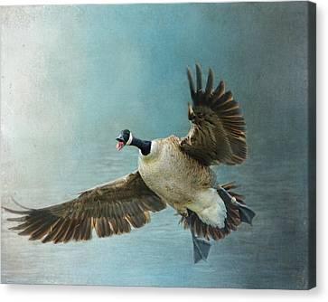 Wait For Me - Wildlife - Goose In Flight Canvas Print by Jai Johnson