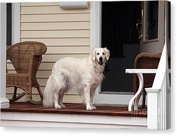 Waiting By The Door For You Canvas Print by John Rizzuto