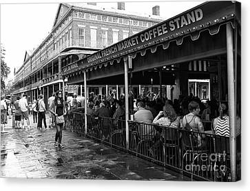 Waiting For A Beignet Mono Canvas Print by John Rizzuto