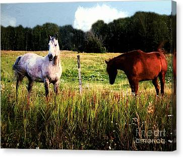 Waiting For Apples Canvas Print by RC deWinter