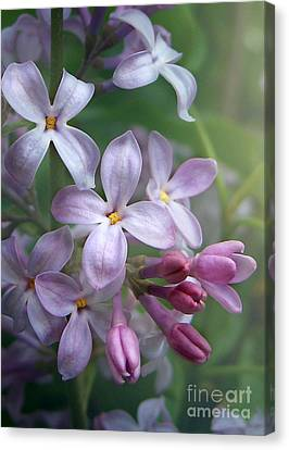 Waiting For Lilacs Canvas Print by Kathi Mirto