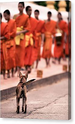 Canvas Print featuring the photograph Waiting For Master by Justin Albrecht