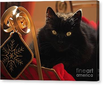 Shelley Myke Canvas Print - Waiting For Santa To Arrive by Inspired Nature Photography Fine Art Photography