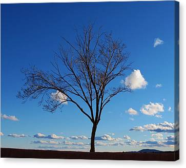 Waiting For Spring Canvas Print by Feva  Fotos