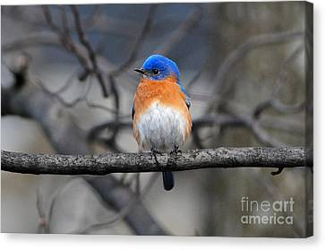 Canvas Print featuring the photograph Waiting For Spring by Olivia Hardwicke
