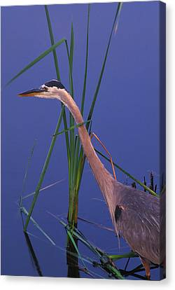 Waiting For The Catch Canvas Print by Bucko Productions Photography