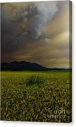 Waiting For The Rain To Come Canvas Print by Mitch Shindelbower