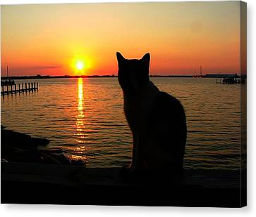 Waiting For The Shrimpers To Come In With Their Catch Canvas Print by Julie Dant