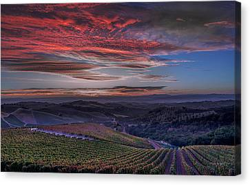 Waiting For The Sun In Adelaida Canvas Print by Tim Bryan