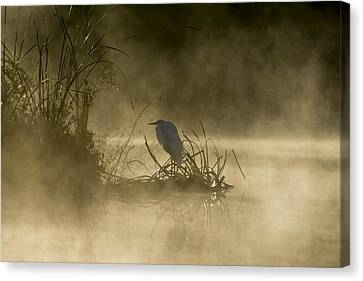 Canvas Print featuring the photograph Waiting For The Sun by Steven Sparks
