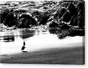 Waiting For Their Meal Black And White Canvas Print