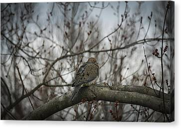 Canvas Print featuring the photograph Waiting On Spring by Phil Abrams