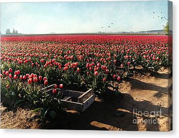 Canvas Print featuring the photograph Waiting To Be Picked by Sylvia Cook