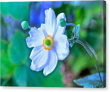 Flower 13 Canvas Print