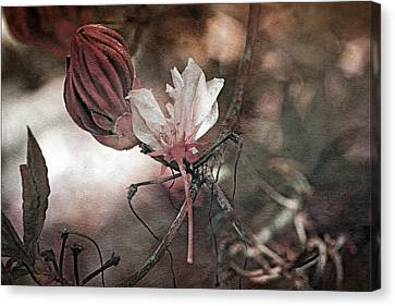Waiting To Blossom Canvas Print by Bonnie Bruno
