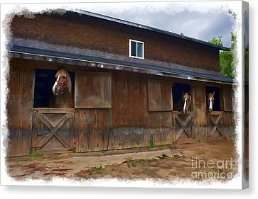 Waiting To Go Out In Field Canvas Print by Dan Friend