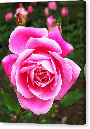 Wake Up And Smell The Roses Canvas Print