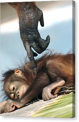 Wakeup Little One Canvas Print by Sue Cullumber