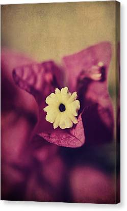 Waking Up Happy Canvas Print by Laurie Search