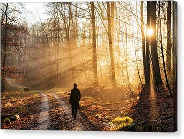 Walk In The Forest Warm Light Sun Is Shining Canvas Print by Matthias Hauser