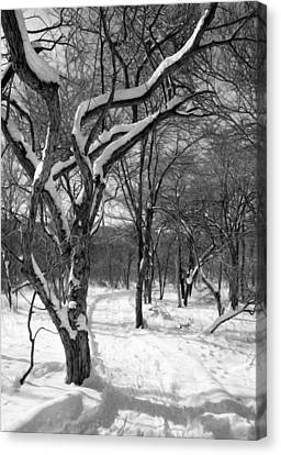 Walk In The Snow Canvas Print by Tracy Winter