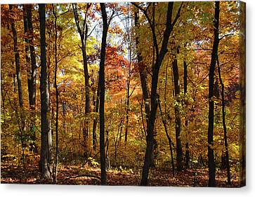 Canvas Print featuring the photograph Walk In The Woods by Harold Rau