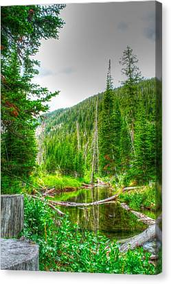Canvas Print featuring the photograph Walk In The Woods by Kevin Bone