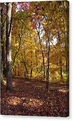 Canvas Print featuring the photograph Walk In The Woods - Vertical by Harold Rau