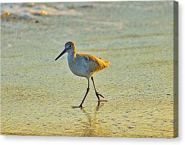 Canvas Print featuring the photograph Walk On The Beach by Cynthia Guinn