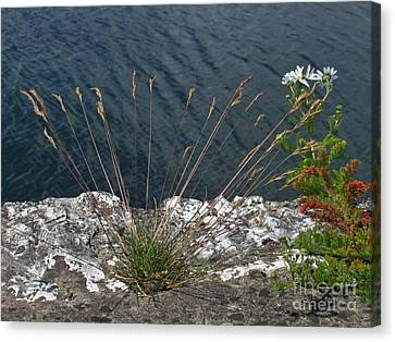 Canvas Print featuring the photograph Flowers In Rock by Brenda Brown