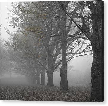 Walk With Me - Chestnut Trees In Fog Canvas Print by Georgia Fowler