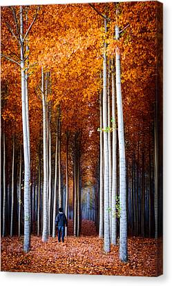Canvas Print featuring the photograph Walking Among Giants by Dan Mihai